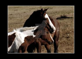 Mother Horse Baby Near FTC des by houstonryan