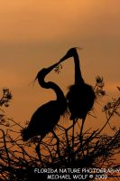 Lovebirds Silhouette by datfly