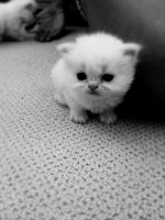Baby Kitten by nicole805riot