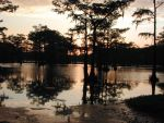 Swamp Sunset by JennyM-Pics