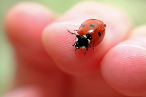 Lady beetle by DamiensPassion