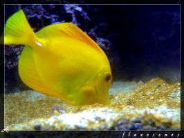 Flavesenes by lizzys-photos