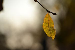Last Breaths of Autumn I by SpaceOddity13