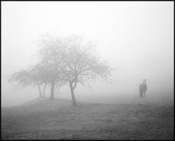 Horse in Fog by jfphotography