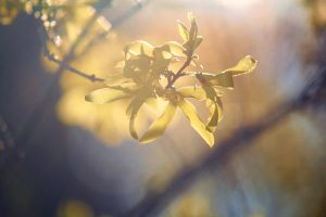 Sunbathing Forsythia by incolor16