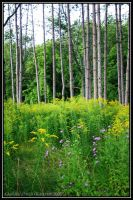In a late summer wood by Nariane