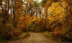 Autumn Road by kalicobay