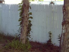 viney tree and a picket fence by amyhatesyouaswell