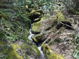 A Third Mossy Creek by Daggett-Walfas