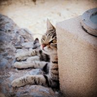 Ephesus cat III by lostknightkg