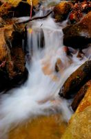 Amicalola Falls State Park 18 by wolphie
