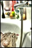 HDR CAT DRINKING WATER by HAPZ86