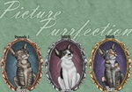 Picture Purrfection (Re-colours for sale!) by AnimalArtKingdom