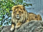HDR Big Cat by simpspin