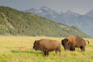 Teton Tramps by TerribleTer