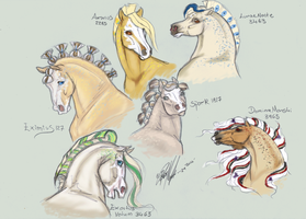 Nordanner headshots by Carousel-Stables