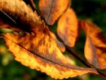 Turning Leaf by iriscup