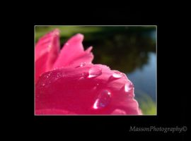 Pink Drop by TheBug