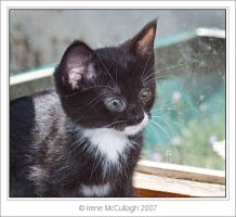 Kitten at Window by substar