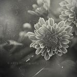Wrapped in my memory.. by addy-ack