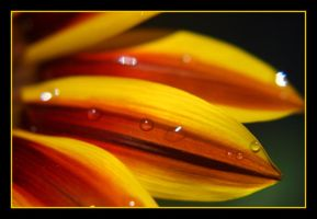 Petals of Fire III by jeepprincess