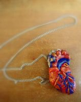 Anatomical Heart by alcat2021