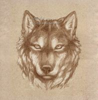 Wolf Face by m-lupus