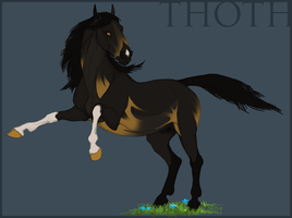 Thoth - adoption audition by Domnopalus