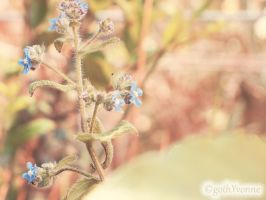 Forget me not by gothYvonne