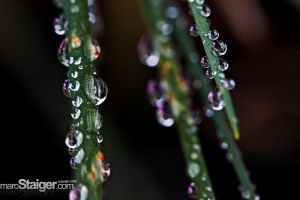drops by stranj