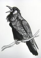 The Vain Crow Opened his Mouth to Sing by HouseofChabrier