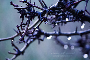 Droplet by TammyPhotography