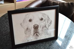 Levi Portrait [Golden Retriever Commission FRAMED] by JackSephton
