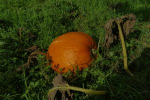 calabaza by eross-666