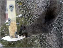 how birdseed dissappears by Lou-in-Canada