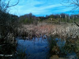 Fen - Water where Stone once was - Restored Nature by Harkfast
