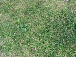 00183 - Grass with Clover by emstock