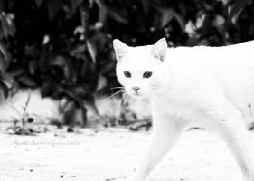 White Cat by reddes