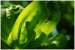 wrinkles of green by rapidvision