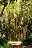 Bamboo Forest by OffDWallNotDRack