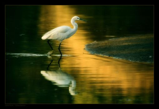 Gold Rush by gilad
