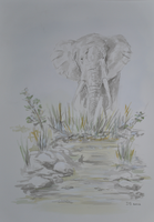 Quick elephant sketch by acrylicwildlife