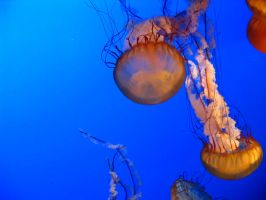 Jellyfish 3 by abuseofstock