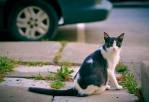 Stray cat by Prophesies