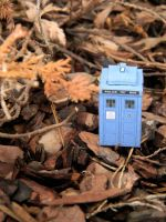 If a Mini TARDIS Lands by missbagel