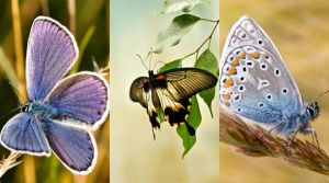 Samsung Wallpaper Butterflies by Diceeno