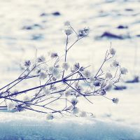 .: still is snow :. by all17