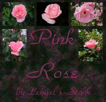 Pink Roses Pack by Lengels-Stock