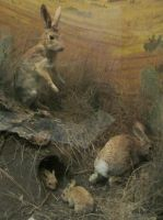 Taxidermy 9 by chamberstock