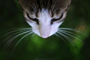 Whiskers by ZoranPhoto